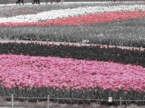 02_Pink.JPG