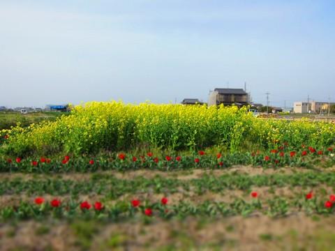 03_菜の花.jpg