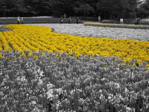 03_Yellow.JPG