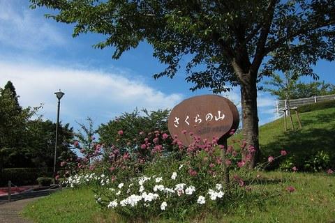 1_さくらの山公園.jpg